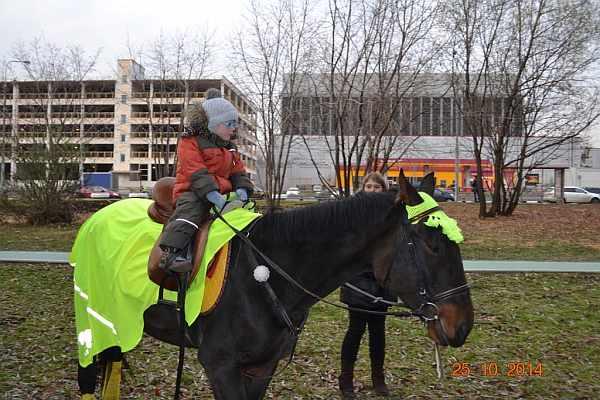 Лошадь, катание на лошадях