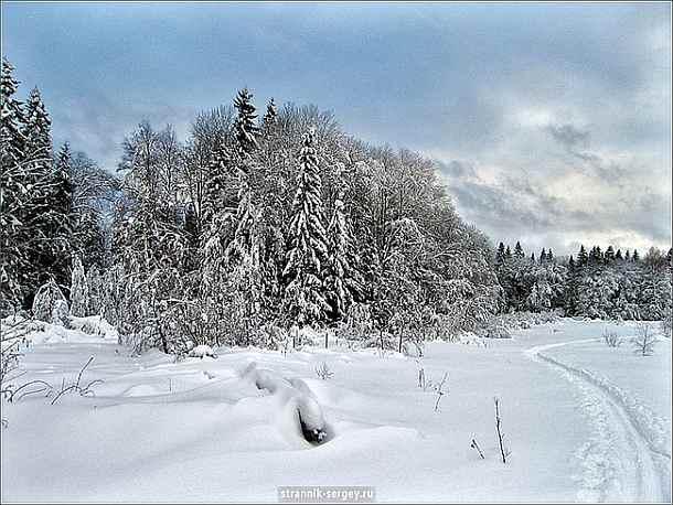 Зима, Лыжи, Лес