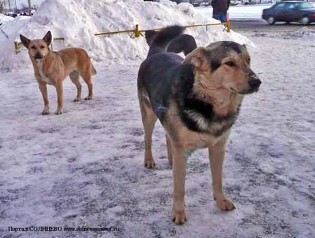 Собаки, Бездомные собаки