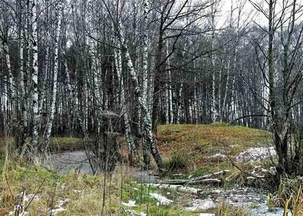 река, лес, дерево