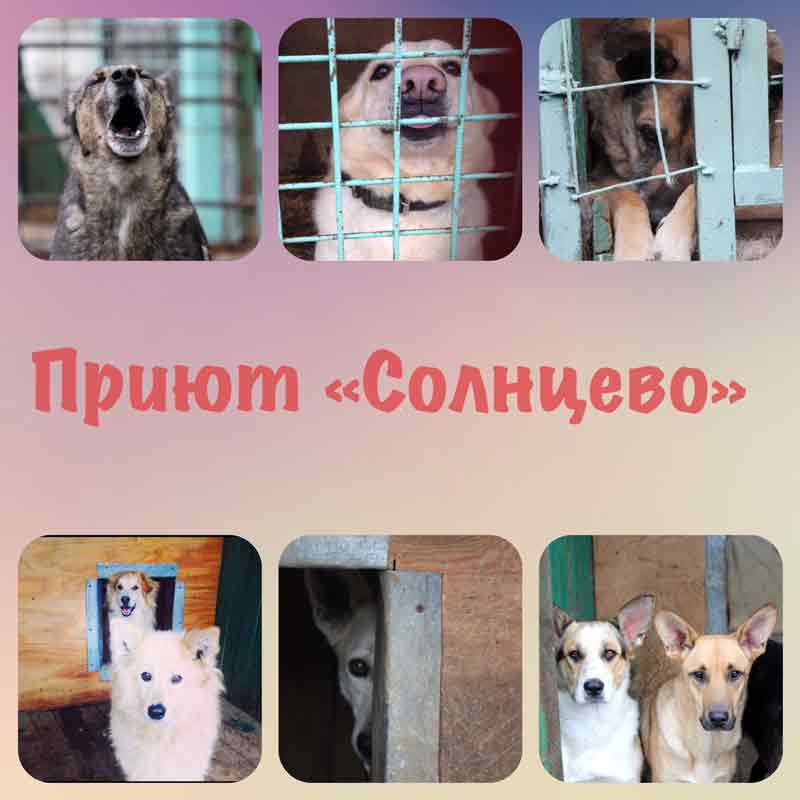 Приют Солнцево, собаки
